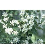 4 Variety Seeds - Saskatoon Serviceberry Amelanchier Alnifolia Seeds #TSP - $16.99+