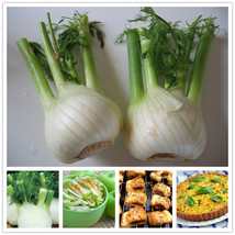 200pcs/bag Europe fragrant bulb fennel seeds organic heirloom seeds vege... - $3.90