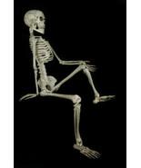 Life Size--BARNEY SKELETON--Human Skull Cheap Halloween Prop Building De... - $85.47