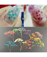 10 Colors 3D Decoration Real Dry Dried Flower for UV Gel Acrylic Nail Ar... - $1.70