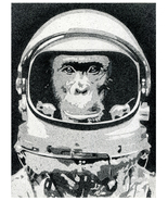 Astrochimp - $18.00+