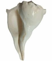 Genuine Spiritual Pearl Dakshinavarti shankh CONCH SHELL for Temple -L-1... - $86.12
