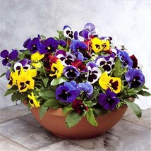 Cat Face Flower Seed 100Pcs/Lot Seeds Viola Tricolor Flower Seeds Balcon... - $5.50