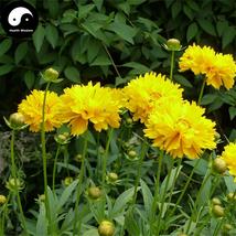 Buy Coreopsis Drummondii Flower Seeds 800pcs Plant Coreopsis Flower Garden - $15.99