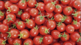 Cherry Tomato Vegetable Seeds Ready To Plant In Your Garden Fresh - $1.99