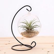 10L0L Terrarium Succulent Flowerpot Container - $17.99