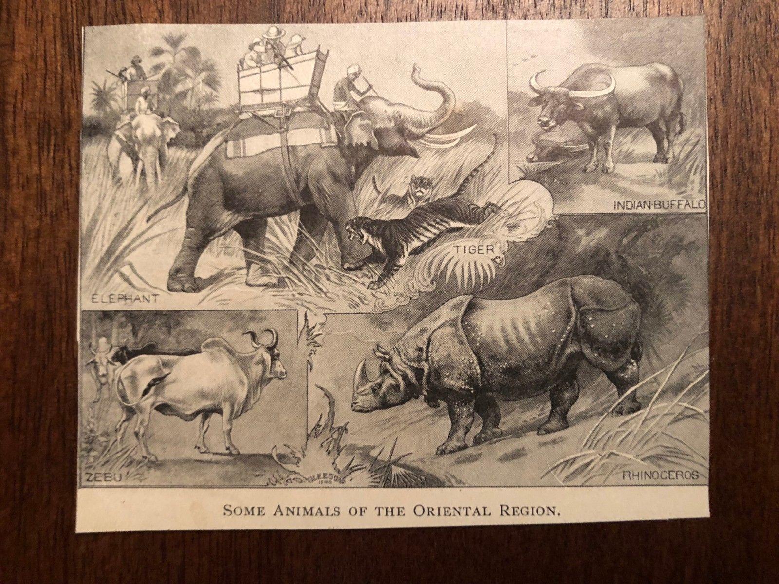 "Vintage Engraving Print of ASIAN ANIMALS Tiger Elephant Unframed 3"" x 4"""