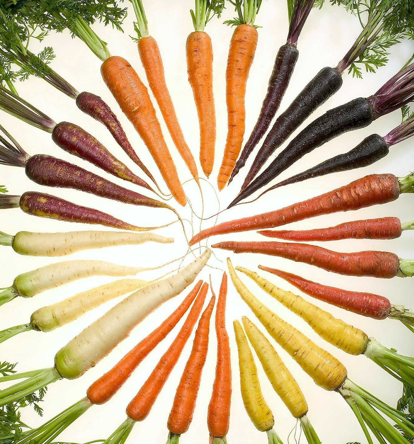 Primary image for SHIP FROM US 500 RAINBOW CARROT MIX White Red Yellow Purple Orange  Seeds SBR4