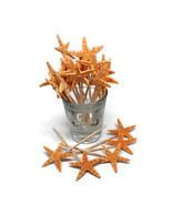 20 Real Starfish Toothpicks for Beach Wedding Shell Tiki Bar Party - £6.02 GBP