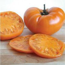 Outdoor Living – Garden - 60 Persimmon Tomato -  Vegetable Seeds - HSG - $19.95