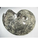 HUGE 8lb Ammonite Fossil Specimen Beautiful!! C2686 - $483.58