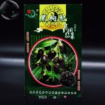 30 Seed Rare Black Goji Lycium Ruthenicum Murray Herb, DIY Healthy Herbs DO - $12.99