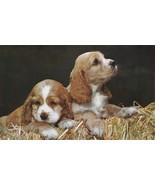 Vintage Postcard Cocker Spaniel Puppies Bicolor Dogs in Hay Unused - $4.94