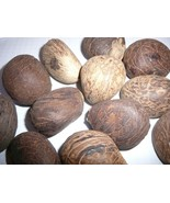 """Tagua Nut Giant 6 Nuts Carving Whole Dried Uncut Nut's Raw  2""""+ - $26.73"""