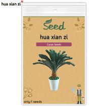 1 Pcs Cycas Seeds, HZ Decorative Flower Plant - $7.13