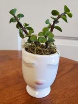 "Succulent in Face Planter, Elephant Bush Live Plant in White Ceramic Pot 2.5"" W - $14.99"
