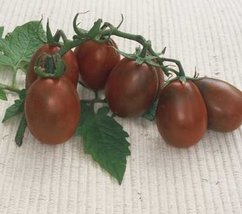 2000 Seeds of Black Plum - Tomatoes Fruited - $59.40