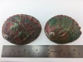 #2 Haliotis Kamtschatkana Assimilis Abalone Set Of 2 79.2-87.2mm - $12.86