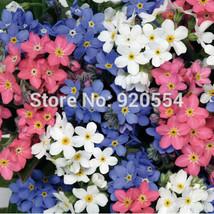 50pcs/lot Myosotis sylvatica ,Forget-Me-Not seeds Bonsai potted plant DIY home g - $7.28