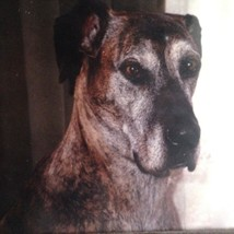 """Vintage Picture Print Great Dane Dog Dogs Wood Wooded Matted Framed 13"""" ... - $19.75"""