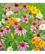 2000 SEEDS-ALL PERCENTNIAL WILDFLOWER MIX种子-10.49美元
