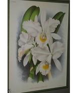 Lindenia Orchid Limited Edition Print Cattleya Trianae Pallida Collectib... - $15.19
