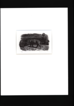 Tiger Walking Away/ A woodcut print By: Christoper Wormell - $180.00