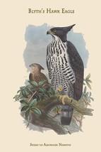Spizaetus Alboniger Nisaetus - Blyth's Hawk Eagle by John Gould - Art Print - $19.99+