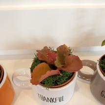 Succulents in Espresso Mug Planters, Set of 3, ceramic Thankful Grateful Blessed image 7