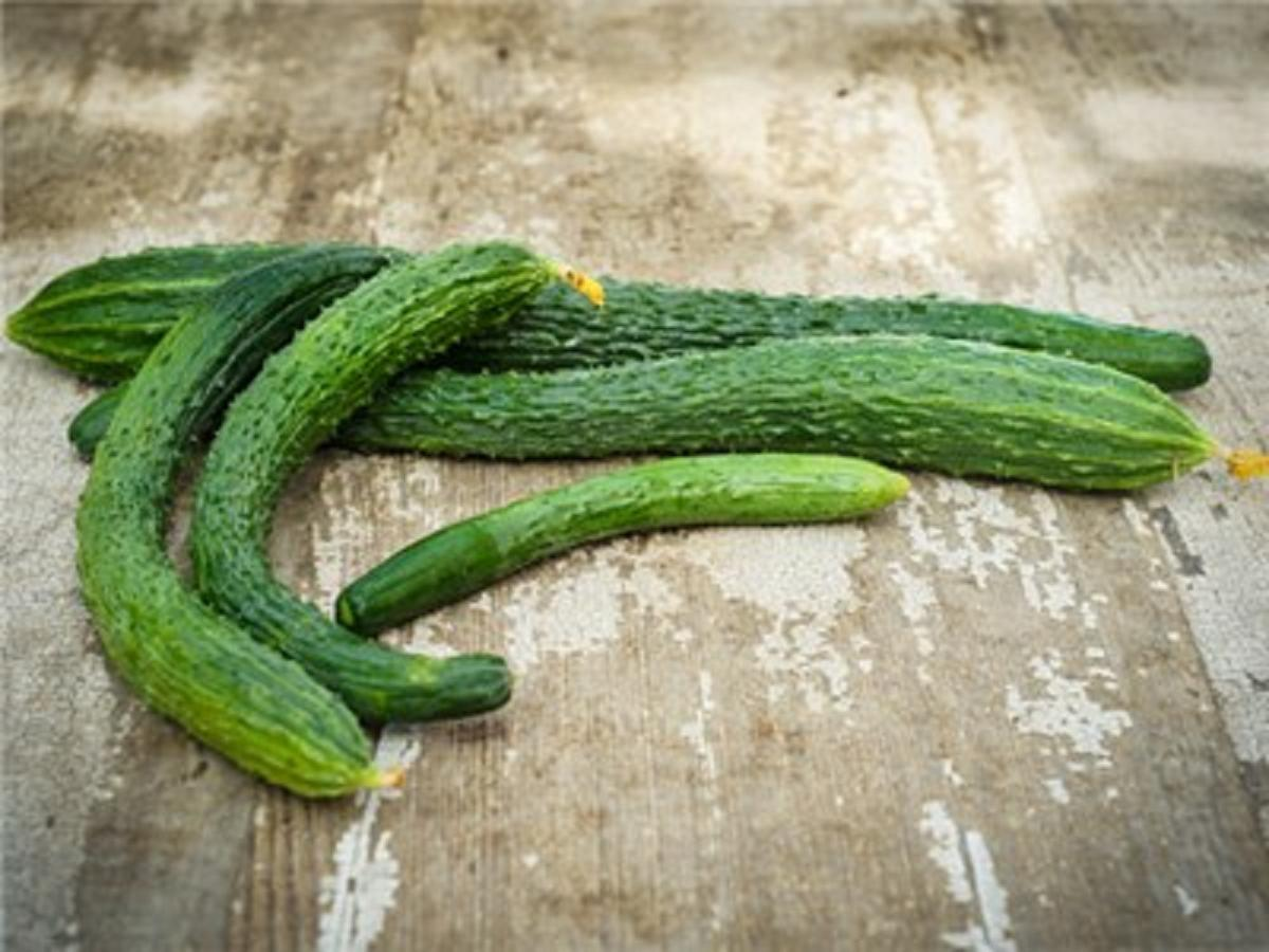 Excelsior Organic F1 FREE SHIPPING!!! Hybrid Cucumber Seeds