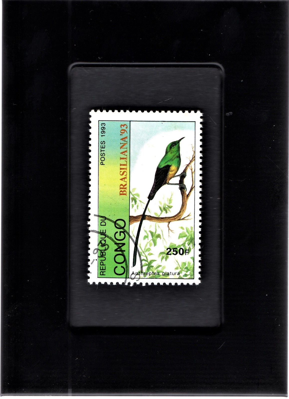 Primary image for Tchotchke Framed Stamp Art Collectable Postage Stamp- Pgymy Sunbird