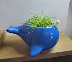 """Live Air Plant in Whale Animal Planter, 5"""" blue glazed ceramic pot, Narwhale"""