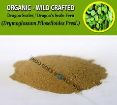 POWDER Dragon Scales Dragon's Scale Fern Drymoglossum Piloselloides Organic Wild - $7.99+