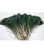 Natural Mini Peacock Eye Tail Feather 10 Piece Indian Decoration Feather. - $12.84