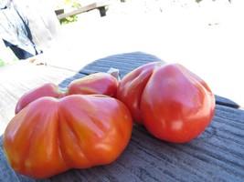 Gruschevij very prolific pear-shaped tomato from Russia - $4.75