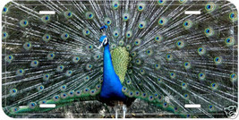 Peacock Bird Aluminum Novelty Car Auto License Plate A01 - $14.80