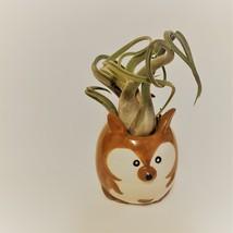 "Kangaroo Pot with Curly Air Plant, Ceramic Animal Planter 2"", Live Tillandsia"
