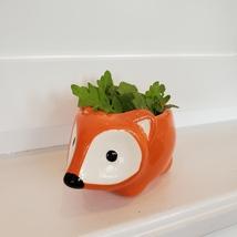 Fox Planter with Microgreens Seed Kit, gardening gift, ceramic animal planter image 3