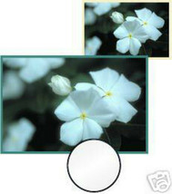 Vivitar 55 55mm Soft Focus Filter   MADE IN JAPAN Used - $7.66