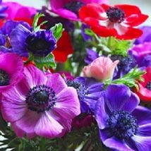 Ship From Us 20 Seeds Decaen Mix Anemone,Diy Sb Flower Seeds - $27.99