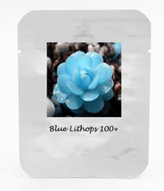 Bright Blue Lithops Livingstones Seeds Bonsai Indoor, 100 seeds/pack - $17.00