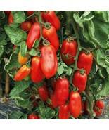 8 Variety Seeds - San Marzano Tomato Famous Italian Pasting Seeds #IMA59 - $12.99+