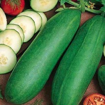 SHIP From US, 25 Seeds Tendergreen Burpless Cucumber, DIY Healthy Vegeta... - $21.99