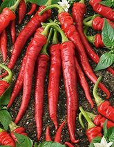 2000 Seeds or 1/2 OZ Cayenne Long Red Thin Pepper Seeds, NON-GMO - $27.72
