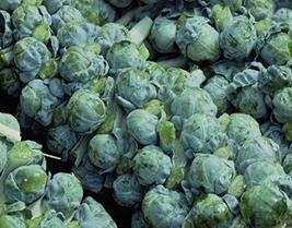 Brussel Sprouts Seed, Long Island Improved, Heirloom, Non GMO, 50+ Seeds, Early  - $4.49