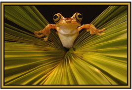 Frog and Toad Photographs  - New -  Fridge magnets - . - $3.94