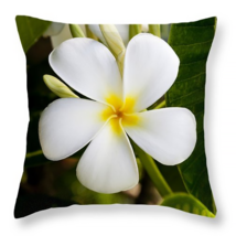 Plumeria of Hawaii, Throw Pillow, fine art, hom... - $41.99 - $69.99