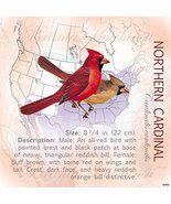 Tree-Free Greetings Refrigerator Magnet, 3.5x3.5 Inches, Northern Cardin... - $8.70