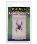 DeAgostini REAL BUGS: Japanese Garden Spider Bug. Free Shipping! Lucite Sealed - $6.79