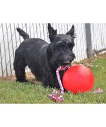 """TUGGO Dog Toy Water Weighted Tug-O-War Mini 7"""" Red Ball w/ Rope Durable ... - $26.95"""